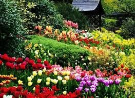 """Képtalálat a következőre: """"tavaszi virágok"""""""
