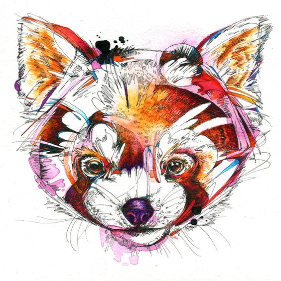 Panda roux art pinterest aquarelle portrait et mon - Panda roux dessin ...