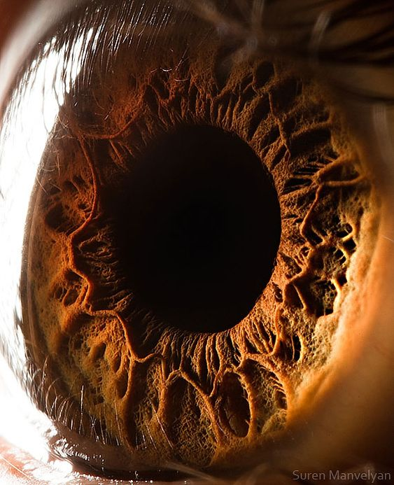 "Extreme close-up of the human eye by Suren Manvelyan. ""His project, entitled Your beautiful eyes, is currently the most viewed project of all time on Behance with 2,999,655 views and is the second most 'appreciated' project of all time with 70,140 likes."""