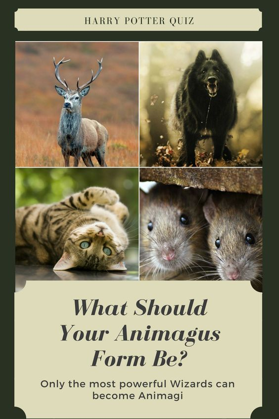 What Should Your Animagus Form Be Harry Potter Fun Facts Harry Potter Day Harry Potter Tumblr