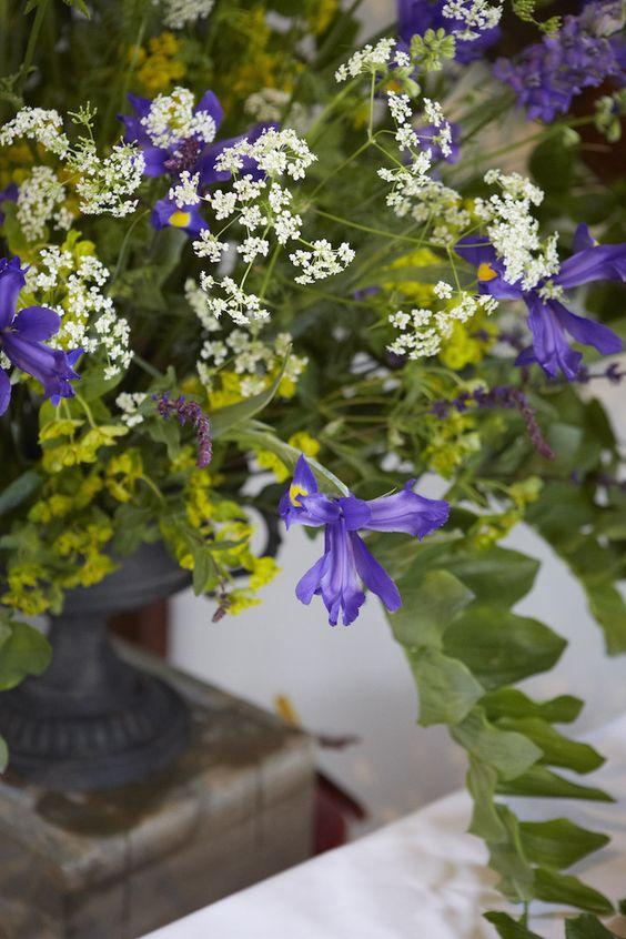 Electric Daisy Flower Farm | Arrangement