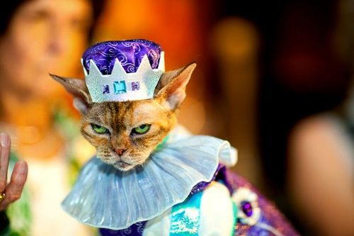 funny: Cat Fashion, Kitty Cats, Evil Cats, Cats In Costume, Funny Cat, Funny Stuff, Crazy Cat, Funny Animal, Cats Princesses Queens Kings