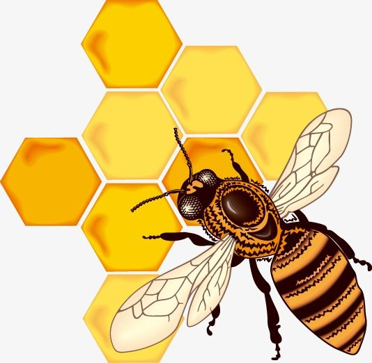 Dibujos Animados De Panal De Abeja Cartoon Panal Bee Png Y