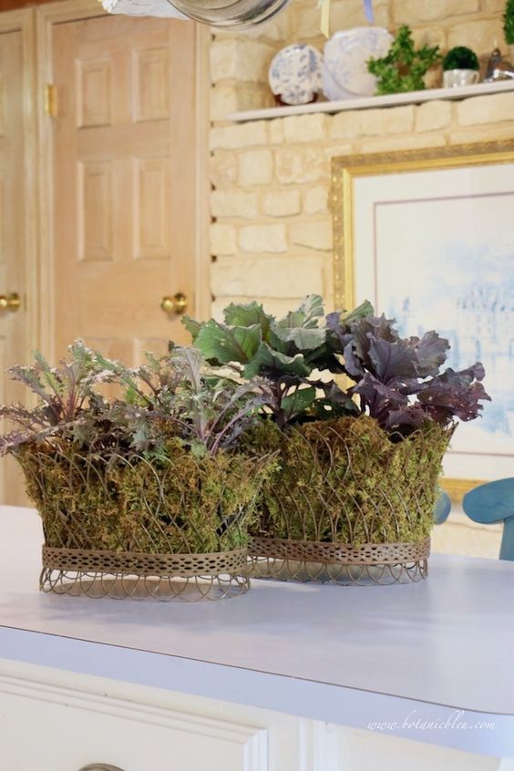fall french country kitchen with stone wall decorated with ornamental kale in french wire baskets