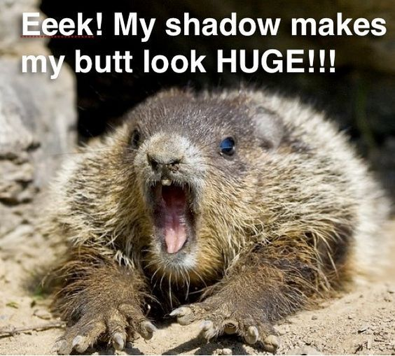 A Little Dose Of Happy With Cute And Funny Groundhog Memes Friday Frivolity Groundhog Pictures Happy Groundhog Day Groundhog Day