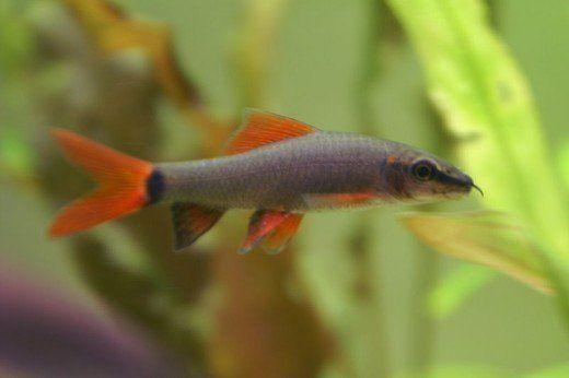 Pin On Fish Plants