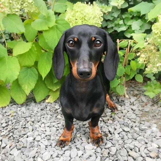 80 Black And Brown Dog Names