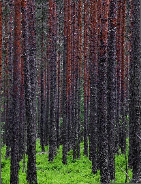 Green carpet, via Flickr.