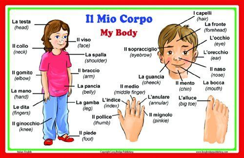 Words In Italian Translated To English: Italian Language School Poster: Italian Words About Parts