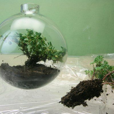 Forming a Plant Plug to Fit Through the Neck of a Glass Ball Terrarium