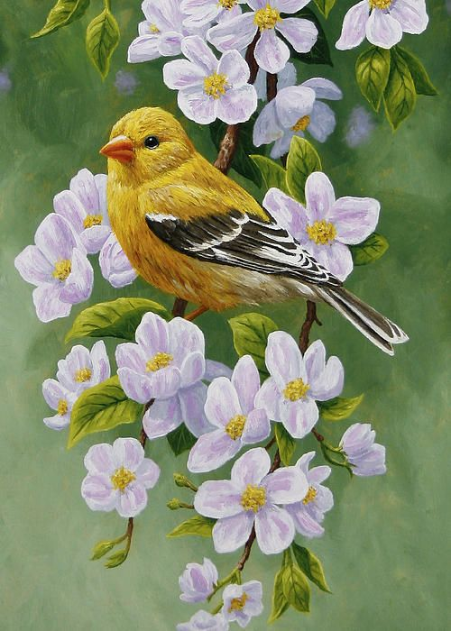 Goldfinch and apple blossoms painting by Crista Forest: