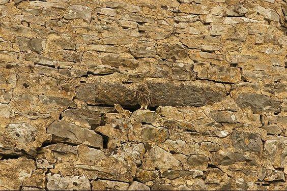 camuflagem-coruja-9