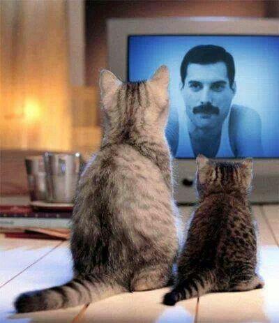 テレビに映るフレディ