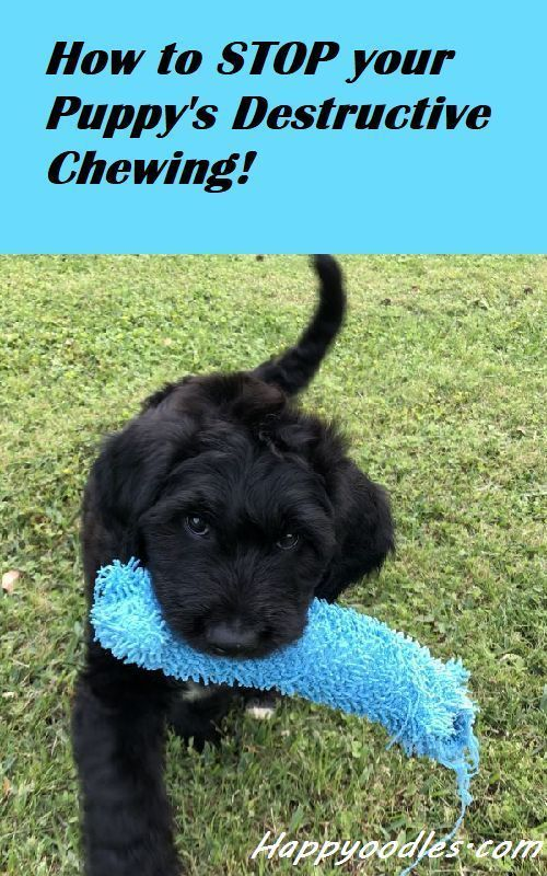 How To Stop Your Puppy S Chewing In 2020 Hondentraining Zindelijkheidstraining Honden