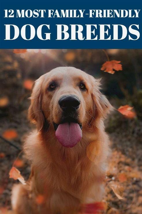Dog Training Denver Dog Training 101 Duet Dog Training 75234