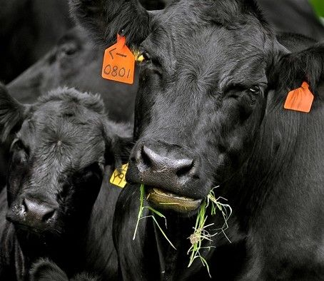 Bon Appetit to buy humanely raised ground beef only - All We Can Eat - The Washington Post