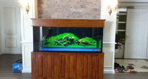 Bể cá rồng - Bể cá rồng gỗ gụ cho không gian nội thất hiện đại