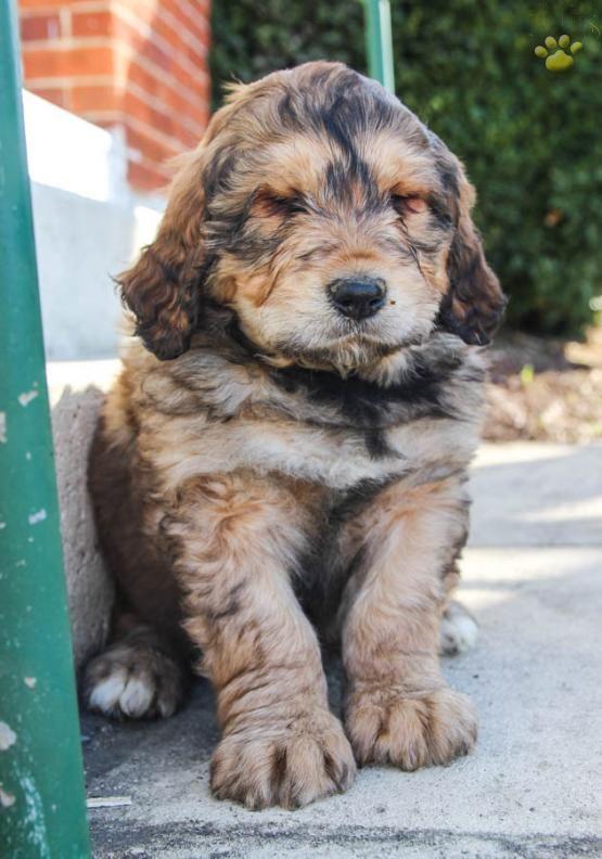 Top 10 Unreal Rottweiler cross breeds (Mix breeds)