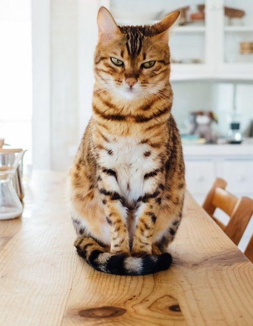 So Machen Sie Ihre Wohnung Haustiersicher In 2020 Haustier Katzen Tiere