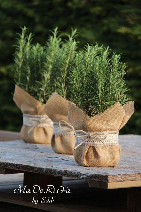 Quando se trata de favores, trata-se de doar uma planta. Pode ser uma planta suculenta, fácil de manter ou um plano ... - Georgette Alam