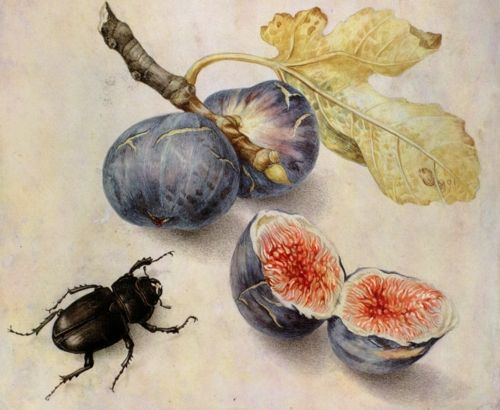 Figs and Beetle by By Giovanna Garzoni (1600-1670).