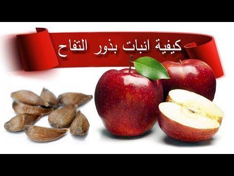 كيفية انبات بذور التفاح بسهولة Youtube Jardinage Abeille