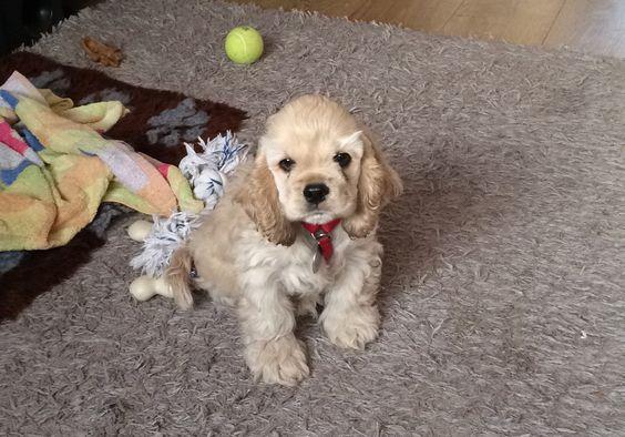 Bailey at 10 weeks x