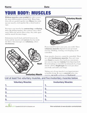 Muscle, Worksheets and Science worksheets on Pinterest