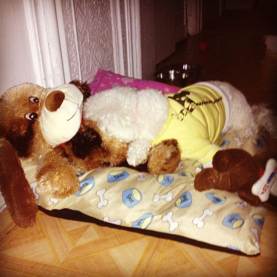 Mininie prefers to wait for #HurricaneSandy sleeping/hiding