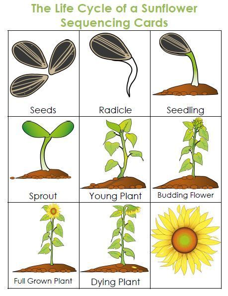 Life Cycle Of A Plant Unit Plant Life Cycle Plants Unit Plants