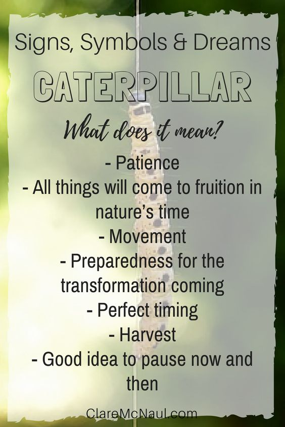 Are you ready for the potential transformation coming? When Caterpillar shows up in your dreams you may need to be. Or perhaps you just need to pause. some thoughts for when Caterpillar shows up in your dreams, psychic and mediumship readings. #caterpillarsymbolism #dreaminterpretation #signsandsymbols #psychicsymbols #symbolsinmediumship symbolinterpretation