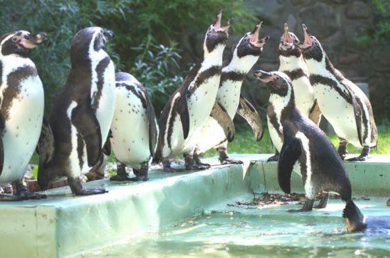 Schweriner Zoo: Auch+Pinguine+lassen+sich+scheiden