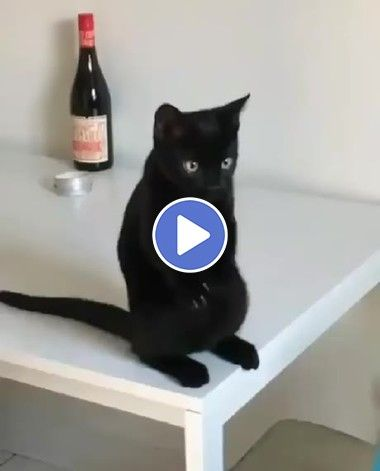 O que será que esse gato está fazendo