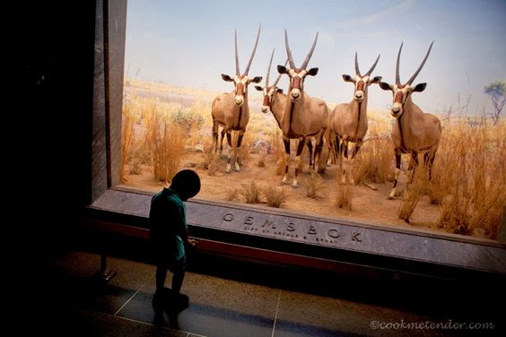 American Museum of Natural History by www.cookmetender.com