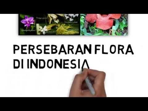 65 Gambar Animasi Flora Dan Fauna HD