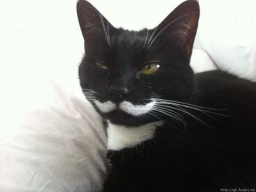 I want a cat with a mustache!