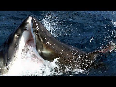 Australia Bull Shark Kills Dog