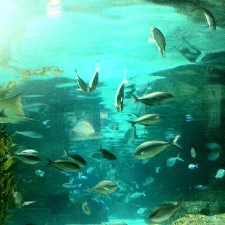 Fish - New Zealand