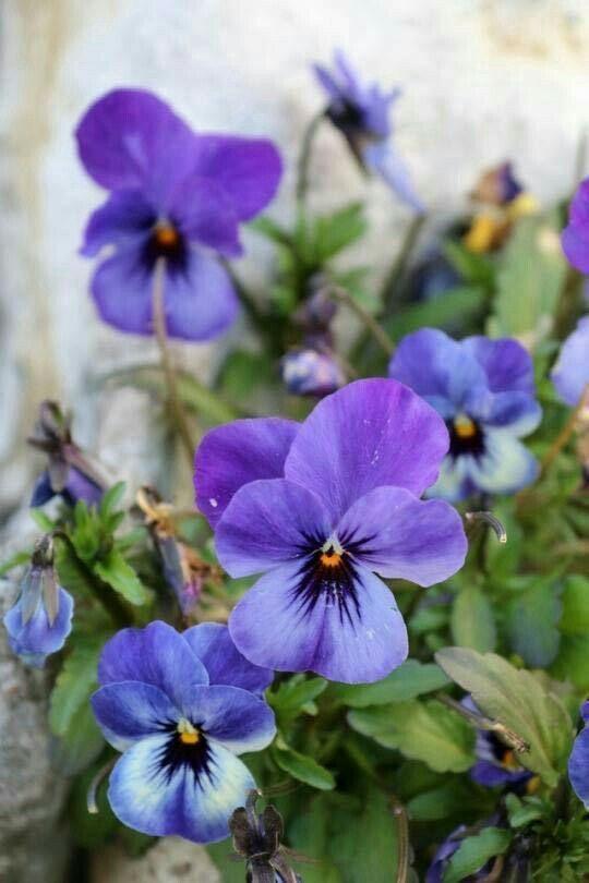 - - #climbingroses #dahlias #pansies #peonies #rareflowers #terrarium