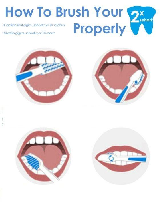 Theodent Theodent Classic1 Theodent Classic Dental Posters Dental Health Dentistry