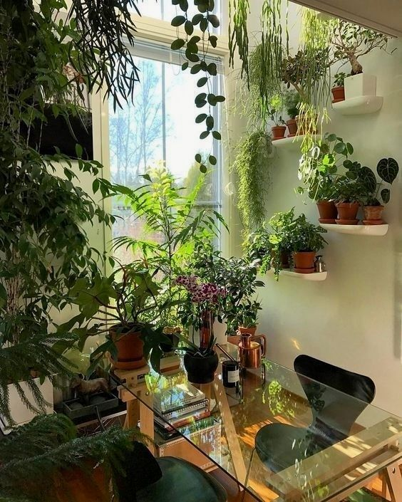 27 Interior Design Plants Inside House Pictures Room With Plants Small Indoor Plants House Plants Decor