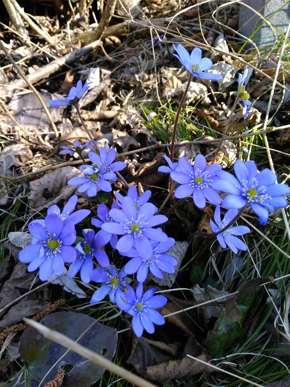 Frühling, Blumen, Spring, flowers