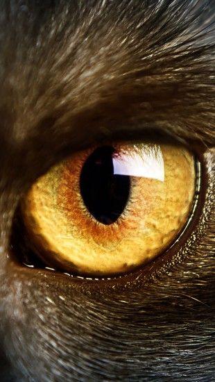 black cat yellow eyes macro - theiphonewalls.com