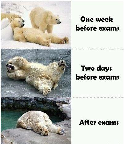 Finals.: Nursing School, Polar Bears, Finals Week, My Life, Polarbear, So True, Funny Stuff