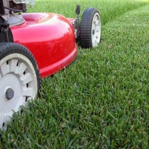 Do you mow the lawn yourself, or hire a lawn service to do it for you? Share with us your reasoning!