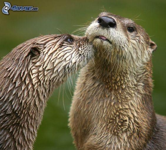 Ottern, Kuss
