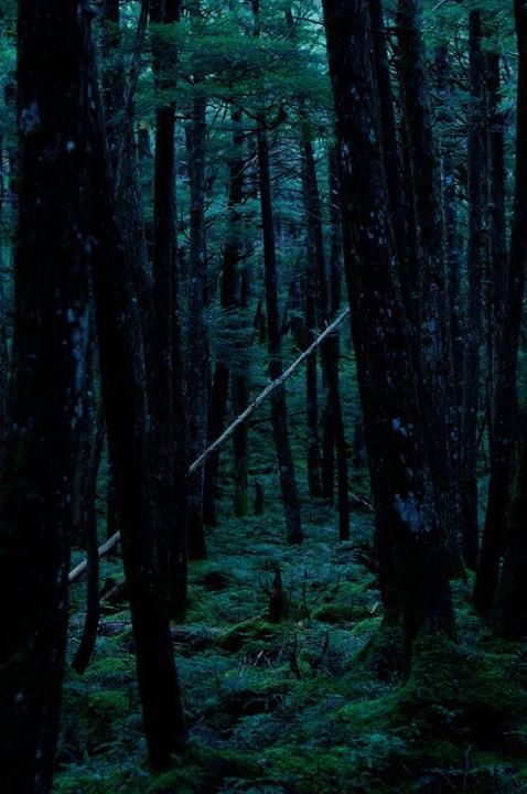 Night Forest Night Forest Forest Photography Forest