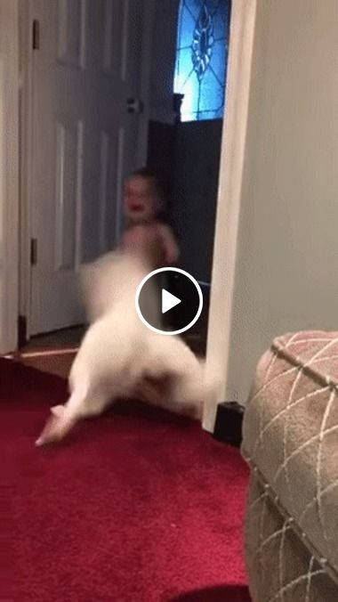 Cão atropela bebe, e derruba muito forte