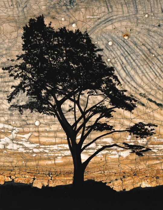 Cypress II - Gillian Lindsay    (via Browse Art - PurePhoto)アート?