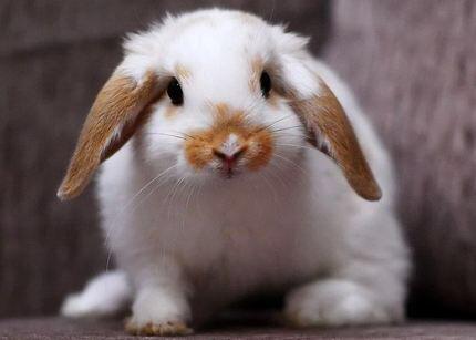 A very beautiful bunny